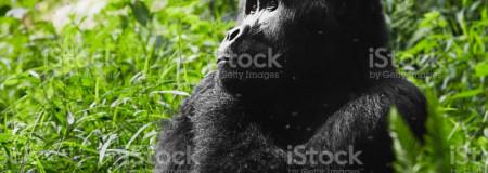 kigali gorillas rwanda